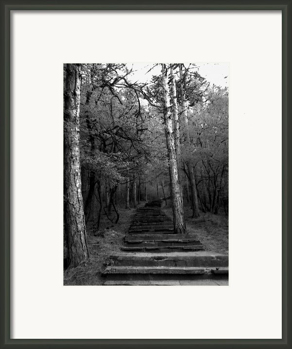Follow Me... Framed Print By Lucy D