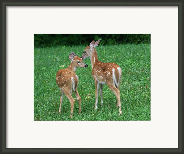 Fond Fawns Framed Print By Charles Warren