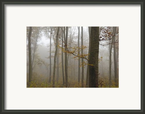 Forest In Autumn Framed Print By Matthias Hauser