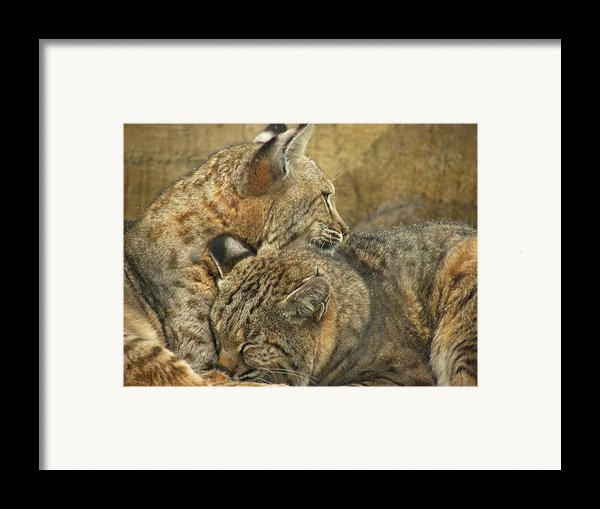 Forever Framed Print By Teresa Schomig
