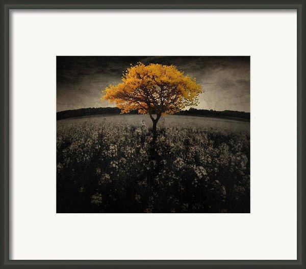 Forever You Framed Print By Brett Pfister