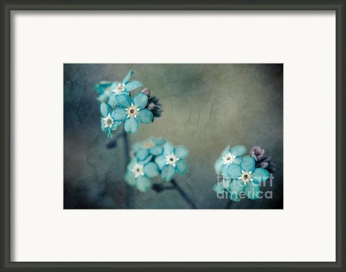 Forget Me Not 01 - S22dt06 Framed Print By Variance Collections