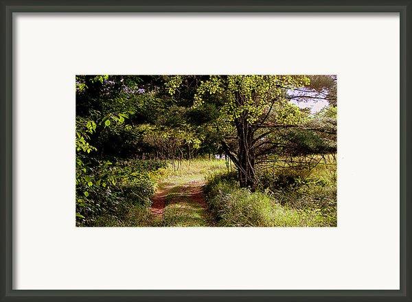 Forgotten Road Framed Print By Tam Graff