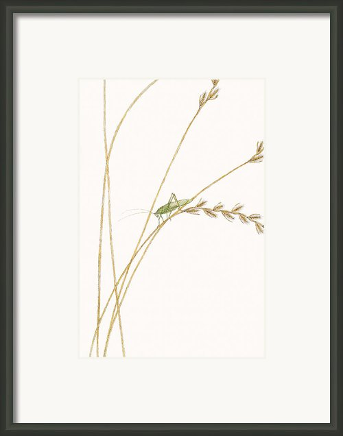 Fork-tailed Bush Katydid Framed Print By Elizabeth Romanini