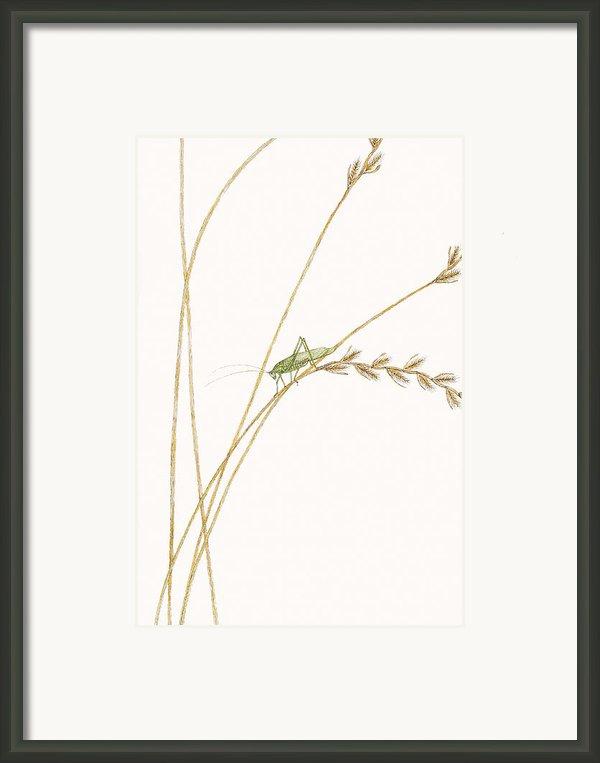 Fork-tailed Bush Katydid Framed Print By Elizabeth Romanini
