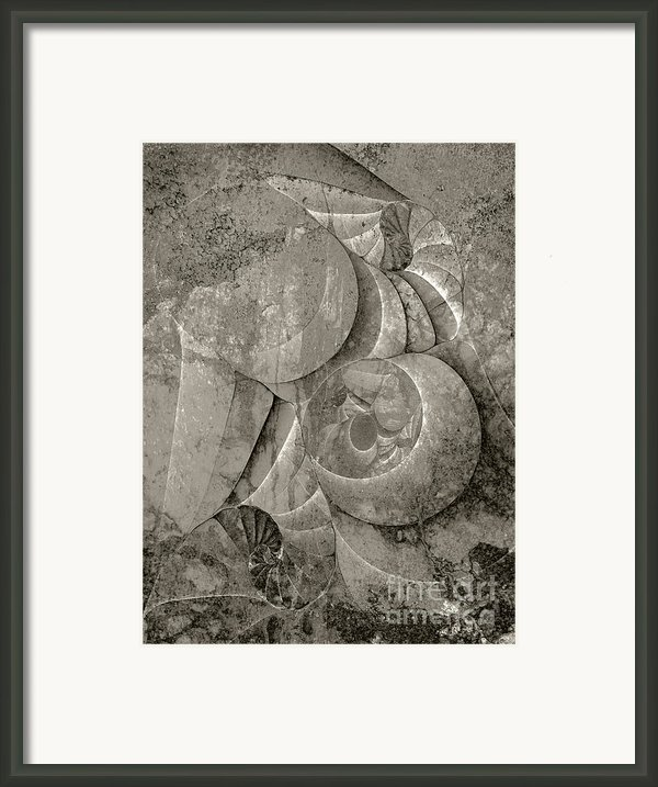 Fossilized Shell - B And W Framed Print By Klara Acel