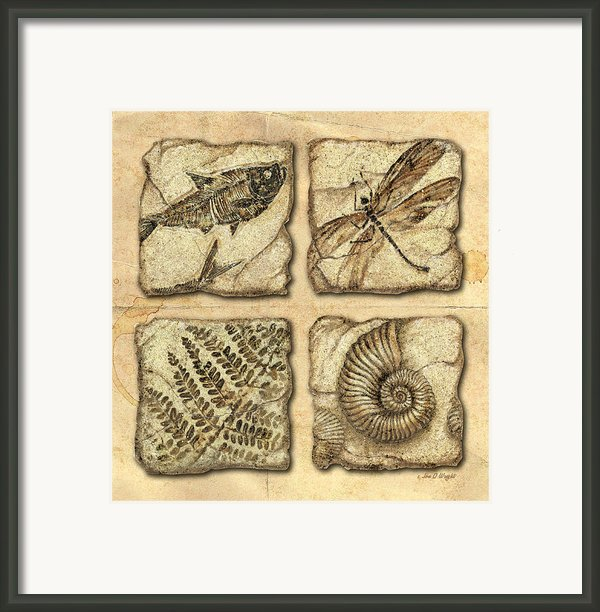Fossils Framed Print By Jq Licensing