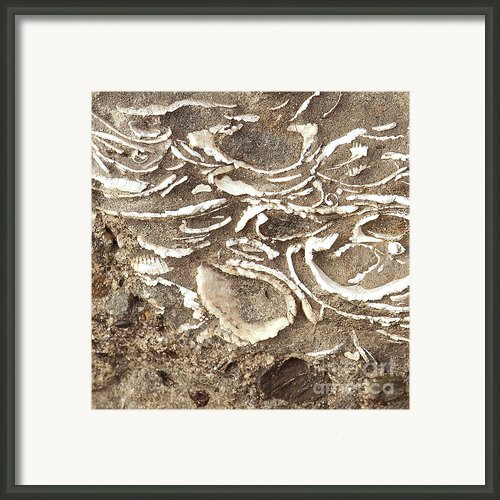 Fossils Layered In Sand And Rock Framed Print By Author And Photographer Laura Wrede