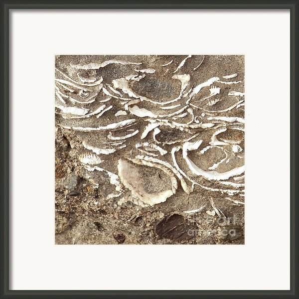 Fossils Layered In Sand And Rock Framed Print By Artist And Photographer Laura Wrede