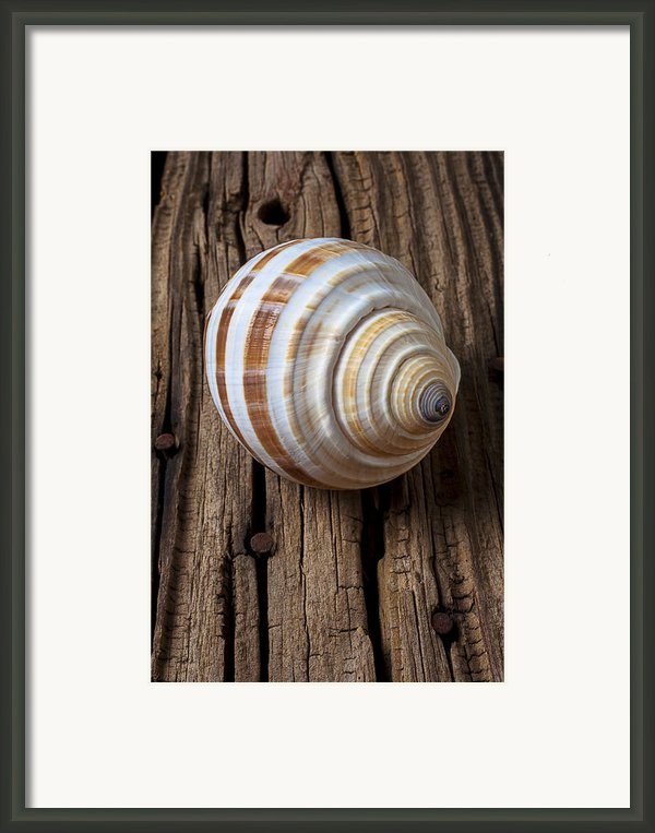 Found Sea Shell Framed Print By Garry Gay