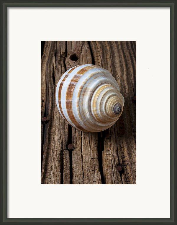 Found Sea Shell Framed Print By Garry Gay