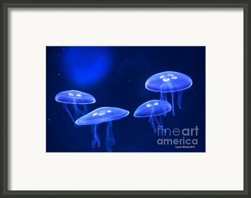 Four Blue Moon Jellyfish Framed Print By Author And Photographer Laura Wrede