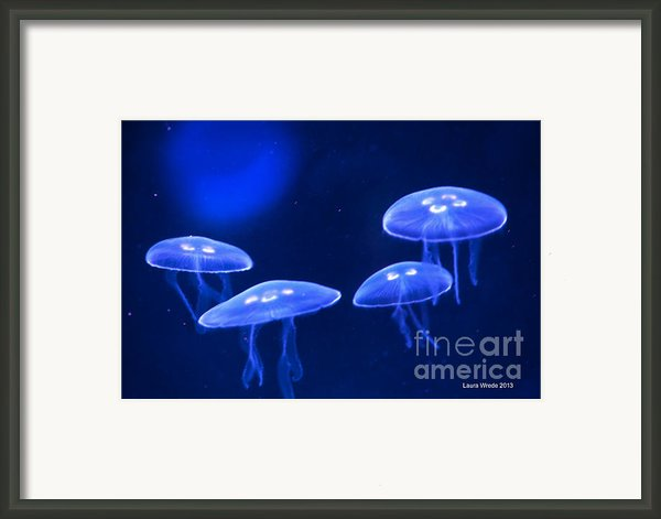 Four Blue Moon Jellyfish Framed Print By Artist And Photographer Laura Wrede