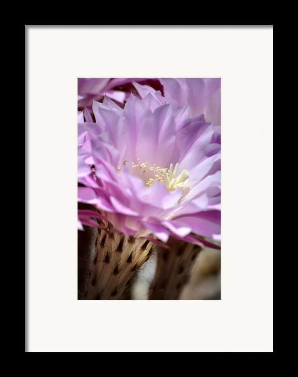 Fragile Beauty Framed Print By Deb Halloran