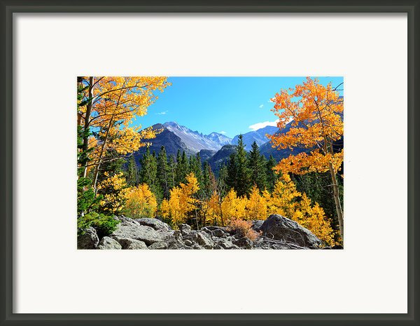 Framed In Gold Framed Print By Tranquil Light  Photography