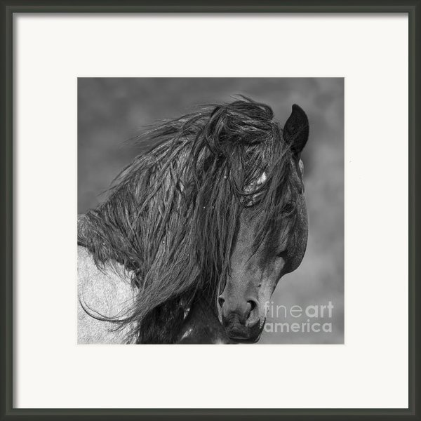 Freedom Close Up Framed Print By Carol Walker