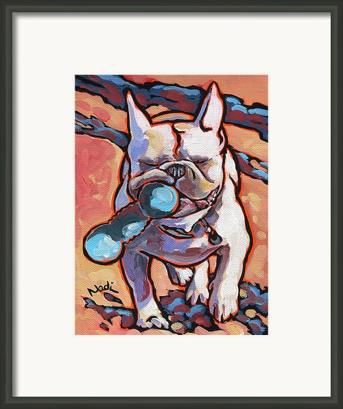 French Bulldog And Toy Framed Print By Nadi Spencer