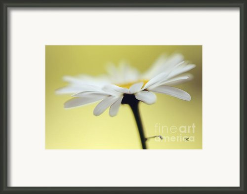 Fresh As A Daisy Framed Print By Lois Bryan