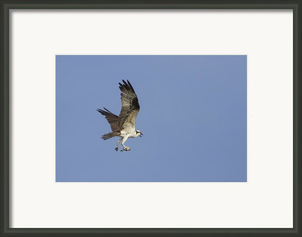 Fresh Catch Framed Print By Charles Warren