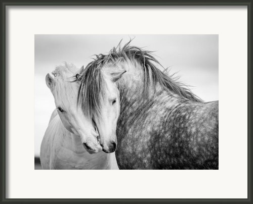 Friends Ii Framed Print By Tim Booth