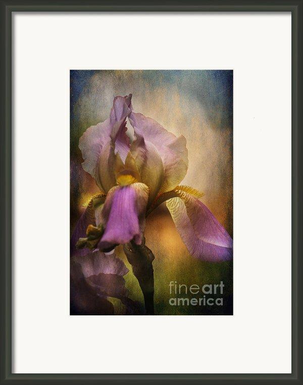 Frilled Beauty Framed Print By Sari Sauls