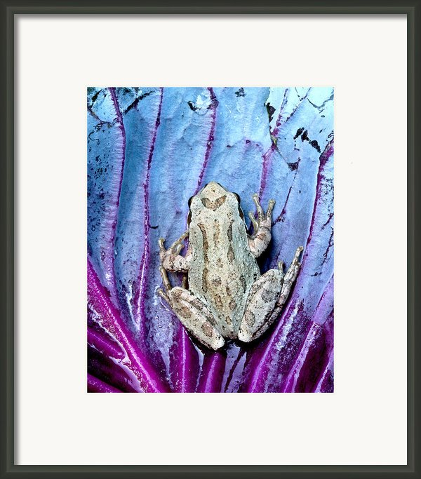 Frog On Cabbage Framed Print By Jean Noren
