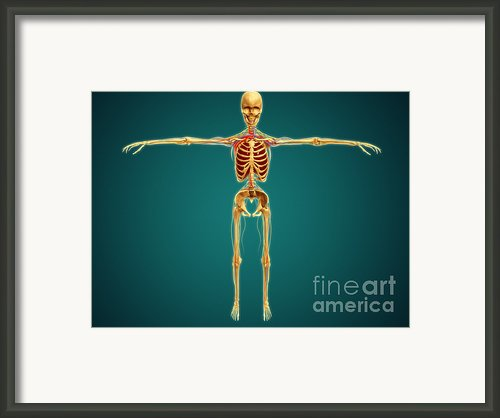 Front View Of Human Skeleton Framed Print By Stocktrek Images