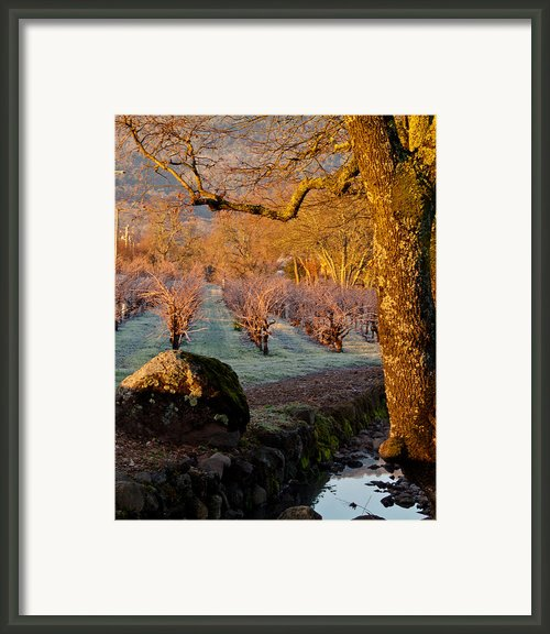 Frost In The Valley Of The Moon Framed Print By Bill Gallagher