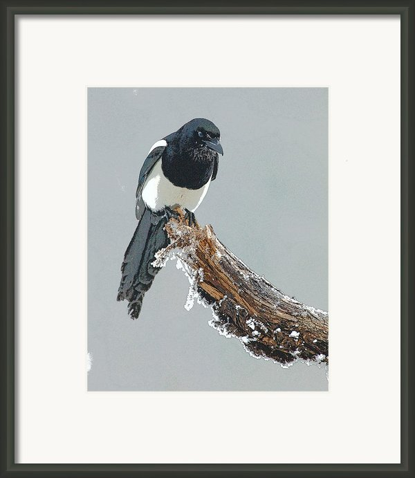 Frosted Magpie- Abstract Framed Print By Tim Grams