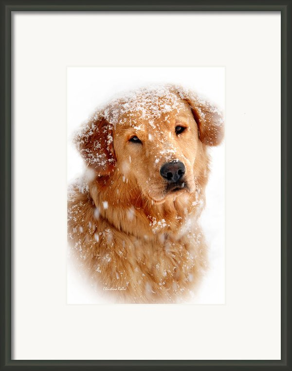 Frosty Mug Framed Print By Christina Rollo
