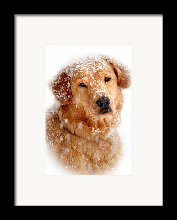 Frosty Mug Framed Print By Christina Rollo