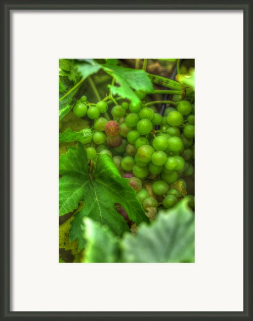 Fruit Bearing Framed Print By Heidi Smith