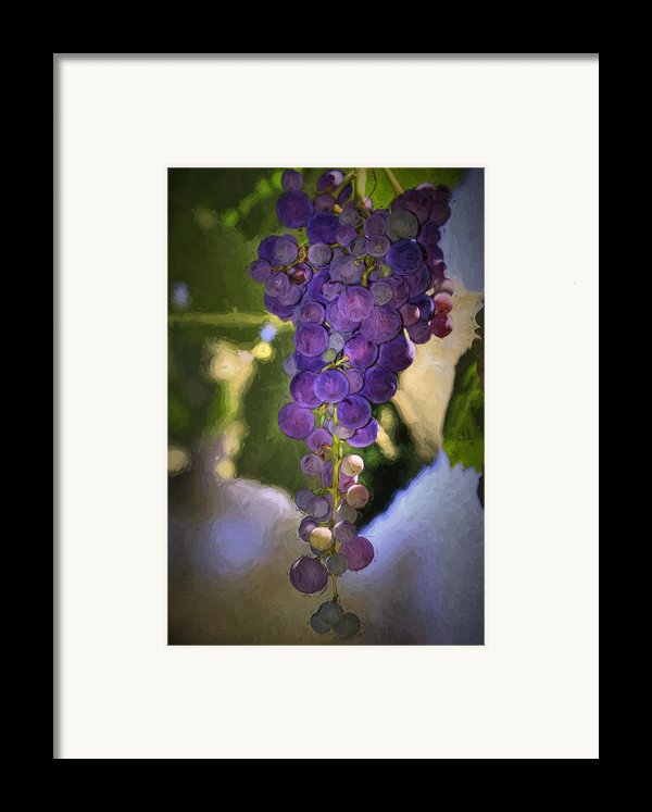 Fruit Of The Vine Framed Print By Donna Kennedy