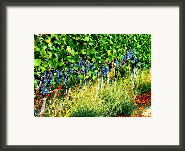 Fruit Of The Vine Framed Print By Kay Gilley