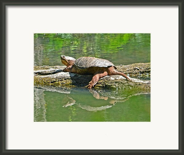 Fun In The Sun Framed Print By Karl Barth