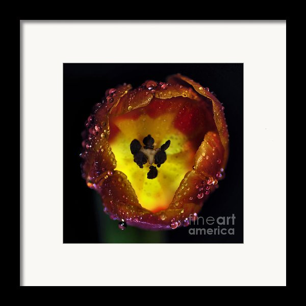 Furnace In A Tulip 2 Framed Print By Kaye Menner