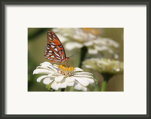 Garden Gem Framed Print By Leslie Kirk
