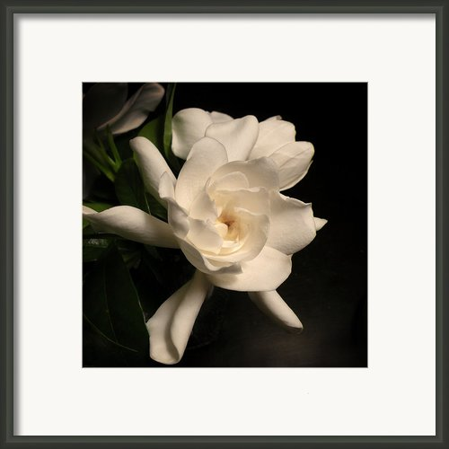 Gardenia Blossom Framed Print By Deborah Smith