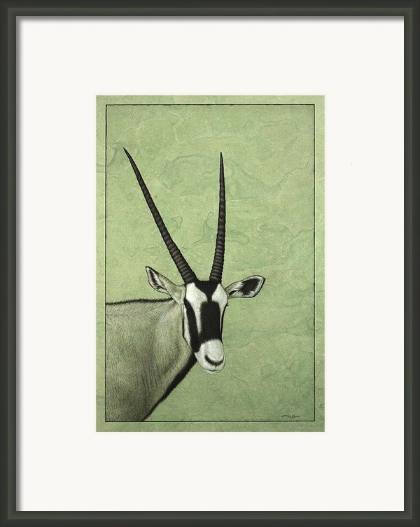 Gemsbok Framed Print By James W Johnson