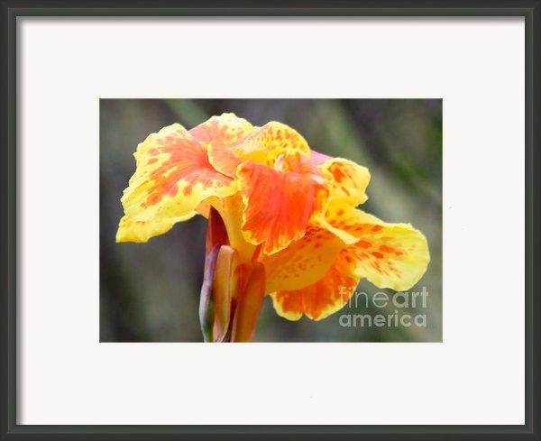 Gentle Awakening Framed Print By Carol Groenen