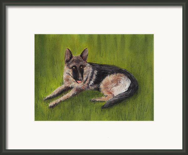 German Shepherd Framed Print By Anastasiya Malakhova