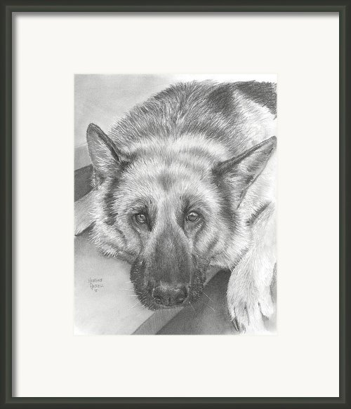 German Shepherd Framed Print By Heather Gessell