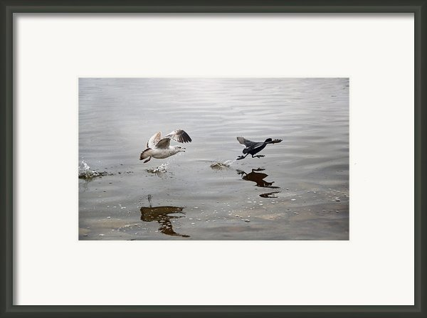 Get Back Here.... Framed Print By Steven  Michael