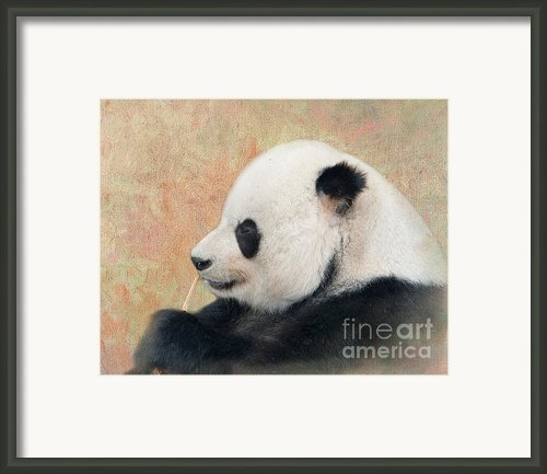 Giant Panda Framed Print By Betty Larue