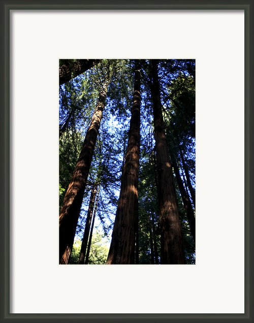 Giant Redwoods California Framed Print By Aidan Moran