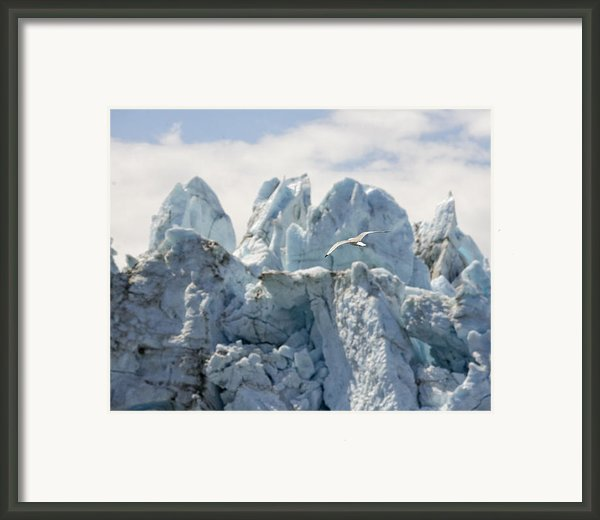 Glacial Flight Framed Print By Vicki Jauron