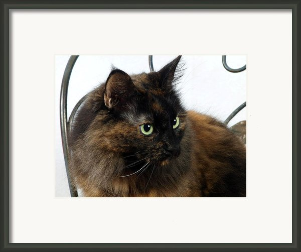 Glamor Kitty Framed Print By Camille Lopez