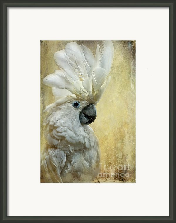 Glamour Girl Framed Print By Lois Bryan
