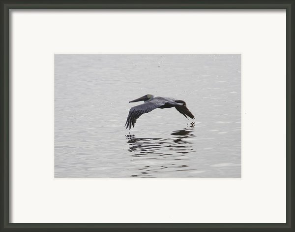 Glide Framed Print By Charles Warren
