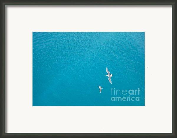 Gliding Seagulls Framed Print By Jacqueline Athmann